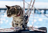 Mit dem Haustier segeln